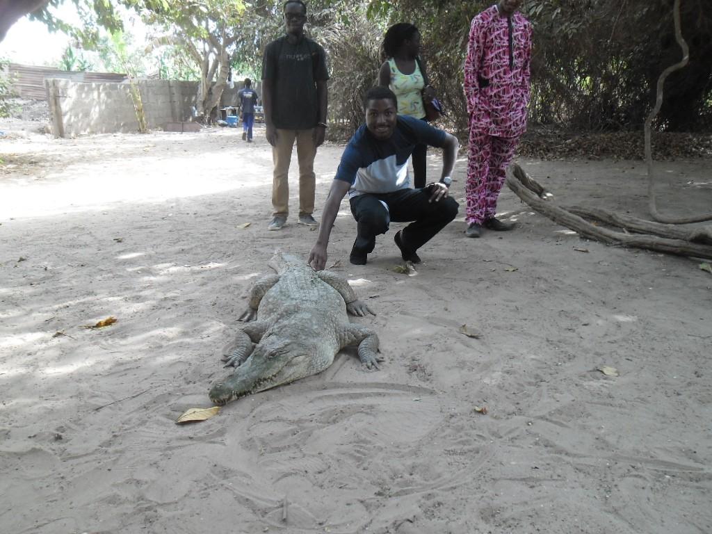 Touching Crocodile